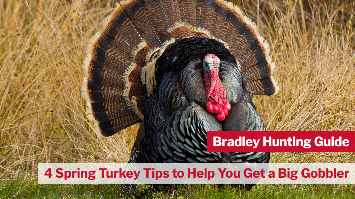4 Spring Turkey Tips to Help You Get a Big Gobbler