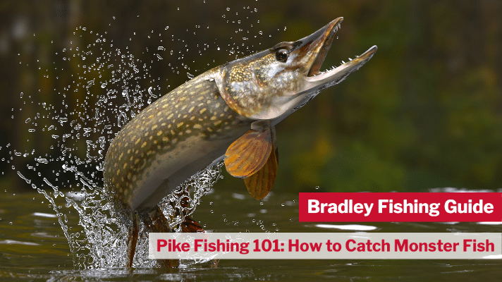 Pike Fishing 101- How to Catch Monster Fish